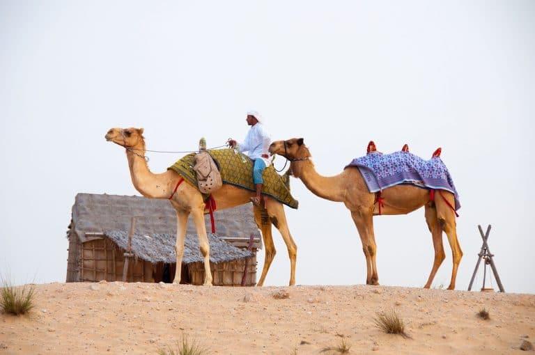 الصحراء في دبي