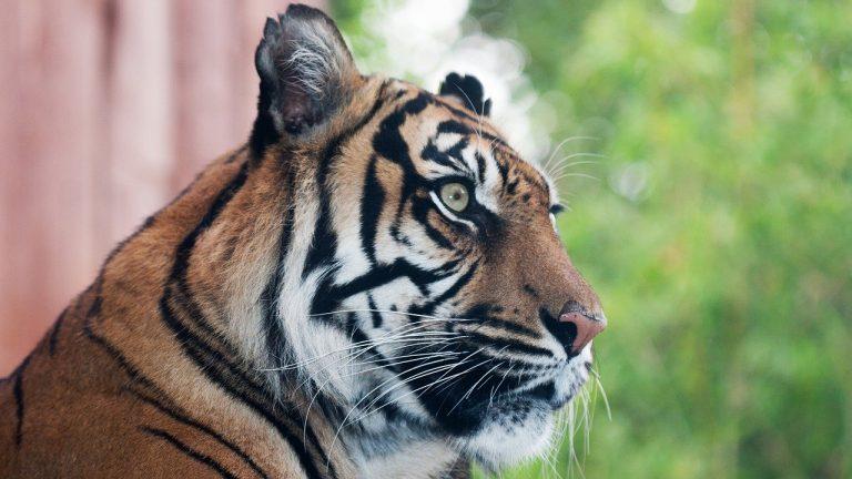 حديقة الحيونات zsl-london-zoo - اماكن سياحية في لندن